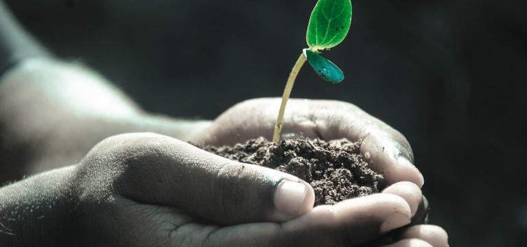 Unas manos donando un montón de tierra de donde nace una planta